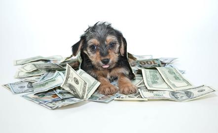 hvad koster en hund